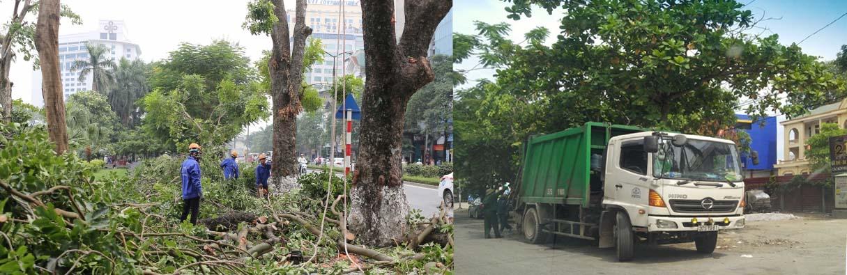 dịch vụ chặt cây xanh hà nội