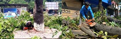 dịch vụ chặt hạ cắt tỉa cây xanh